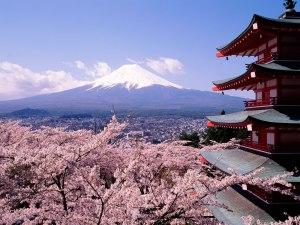 Cerisiers en fleurs, Mont Fuji, Japon